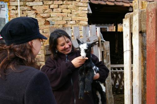 Julieta's baby goat